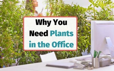 Benefits of Indoor Desk and Office Plants for Employee Happiness, Health, and Wellness