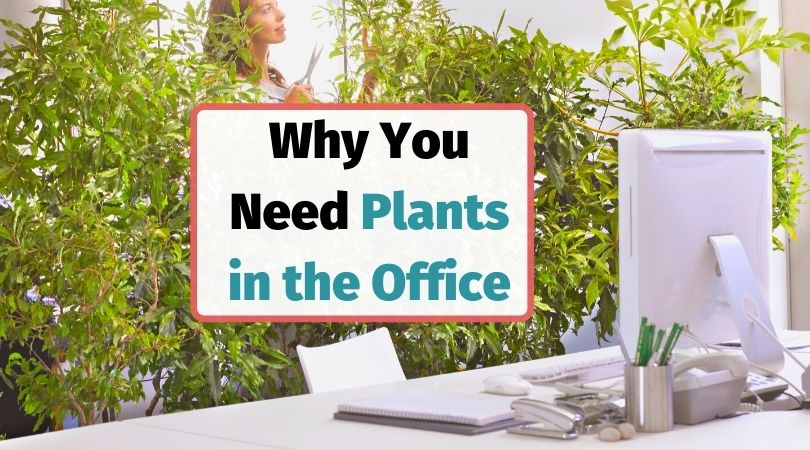 Why you need plants in the office